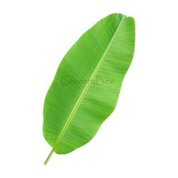 Banana Leaves Fresh