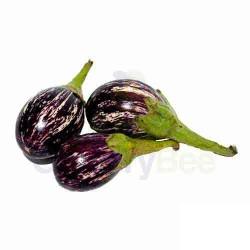 Eggplant / Brinjal Striped