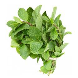 Fresh Tulasi Tulsi Leaves