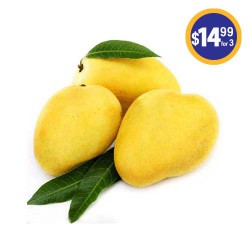 Indian Alphonso Mangoes